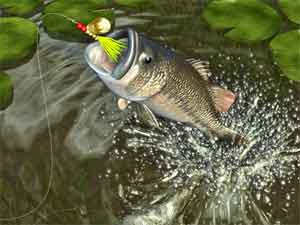 How to Freshwater Fish Like a Pro: OK, I Got This One